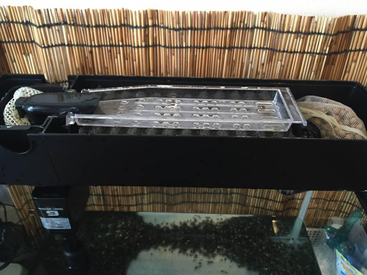 goldfish_aquarium_cleaning_10